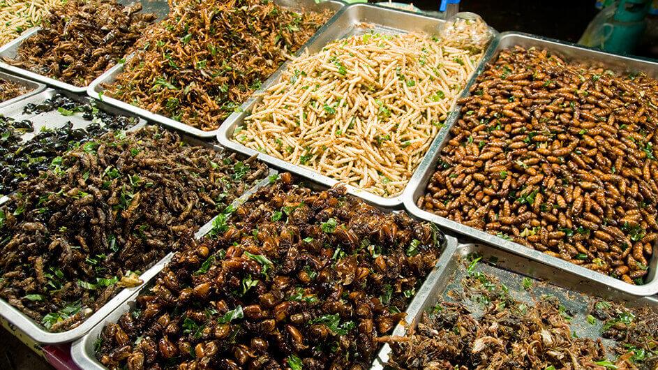 Als Speisen zubereitete Insekten in Schüsseln serviert