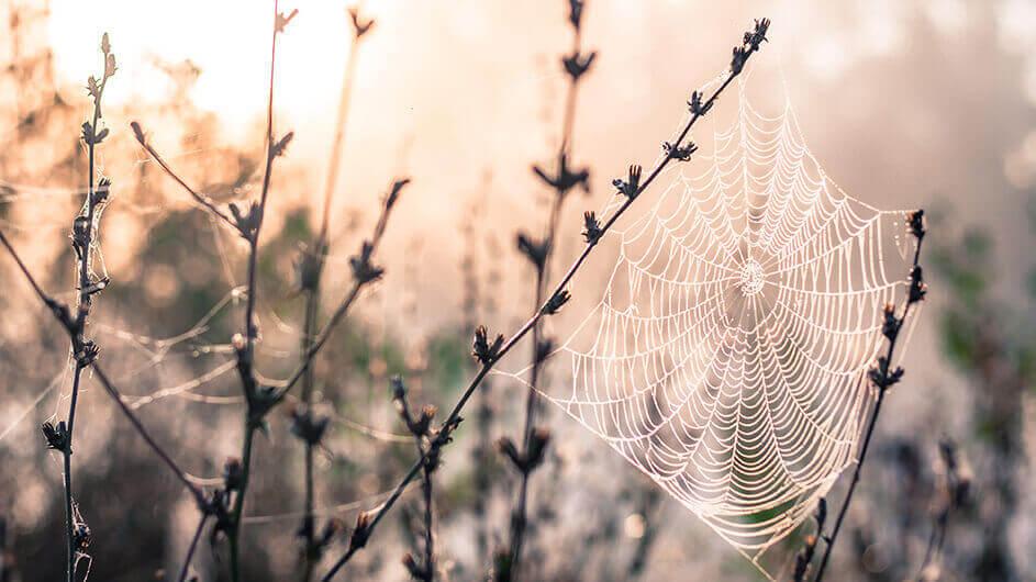 Ein Spinnennetz mit Tau benetzt auf einer Wiese in der Morgensonne